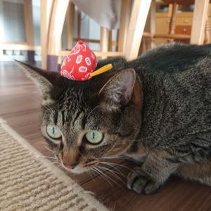 キャットニップ+マキビシと、狩りの心得【猫イラスト】