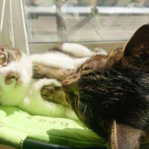 春の足音と、ハンモックベッドと猫(Googleサーチコンソールのお話も)