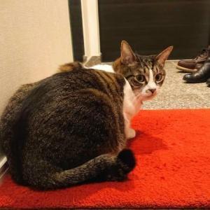 玄関ドアの開閉音が苦手になった猫と、春の消防点検