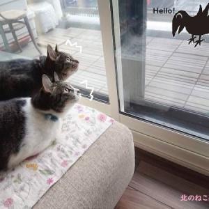 カラスがベランダにくると、頼もしくなる猫たち【ニャルソック】