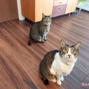 調理中の猫たちの様子、我が家はこんな感じです。
