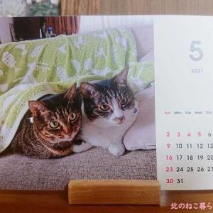 【GW突入】出勤しない飼い主に混乱する猫