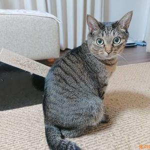「待機姿勢」が板についてきた猫たち