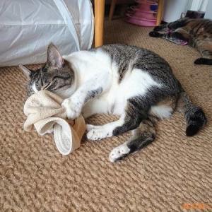 猫が帽子にすりすりする件を考察してみたら…