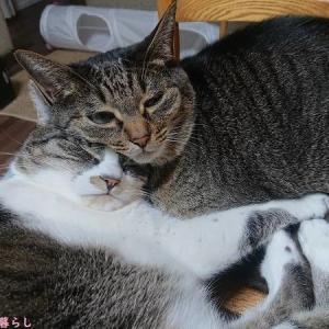 風邪をひいたときの缶詰の思い出は、猫にも通ずる
