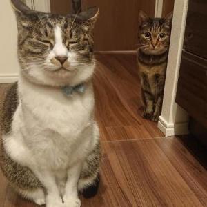 ねこの監視隊長と副隊長、そしておともだち紹介