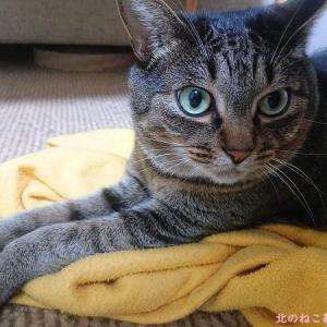 ふみふみフリースで、膝のり猫チャレンジ。