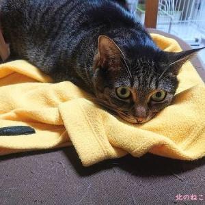 猫たちの寝床ジプシーが始まる【初夏・北海道】