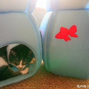 猫涼む 寝床に泳ぐ 金魚の絵