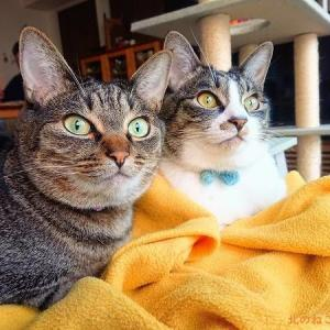 姉妹猫の似ているところ、似てないところ