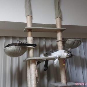 「待機姿勢」がついに崩れた猫たち~2021夏~