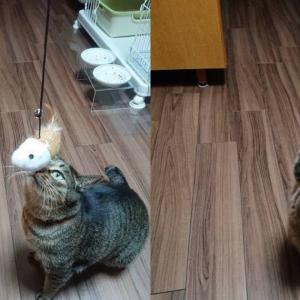 100均猫おもちゃの、キケンな落とし穴