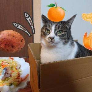 【にしん漬け解禁】秋のおいしいもの祭り