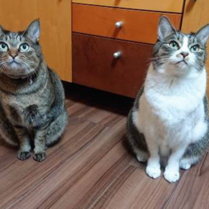 【選べません】「好きな猫の待機姿勢10選」