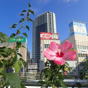 横須賀中央駅で待ち合せ