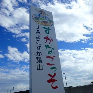 横須賀はすかなごっそを紹介します