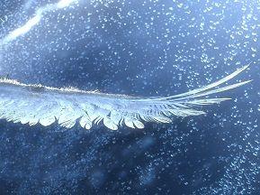 コンドルの系譜 第十話(90) 遥かなる虹の民