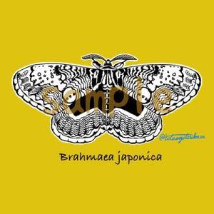 Brahmaea japonicaシリーズ販売中!<br />