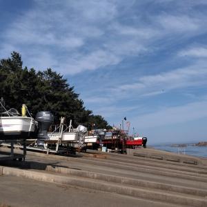朝日町×泊漁業協同組合×マーチオークシー