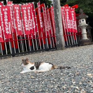 【豊橋】牟呂八幡のネコちゃん