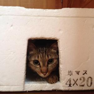 薪焚くひと  -5(薪の歩留まり-3)                #11