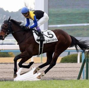 京都外回りコースを2周!!絶対的な体力とレース展開を求められる天皇賞(春)の展望