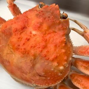 石川の冬の味覚「香箱蟹」をいただきました!
