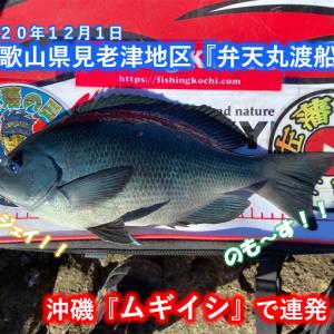 【フカセ釣り】グレがだめならイサギを釣る!! 見老津地区【弁天丸渡船】2020年12月1日