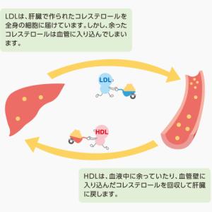 コレステロールの役割