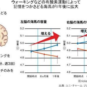 高負荷の運動で高齢者の記憶力が改善 認知症予防に効果が期待