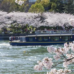 大阪旅行プラン。おすすめの大阪の桜の名所と穴場。