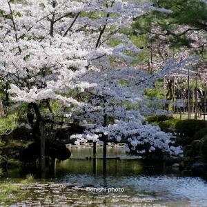 京都観光はバスで観光地へ。駅ビル前からぶらり平安神宮の桜見物。