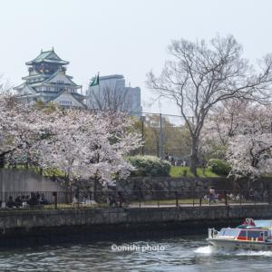 大阪の桜/開花状況/名所と見頃は/大阪城公園/天満橋/2019