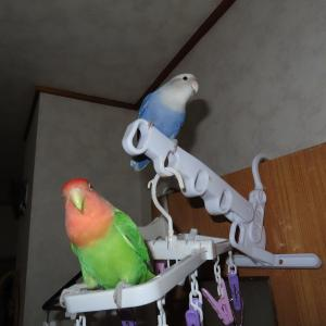 若鳥の脚力