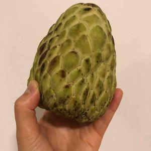 シンガポールで南国フルーツを食べよう - 釈迦頭(シュガーアップル) -