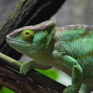 シンガポール動物園の年パス更新 -おすすめのタイミング-
