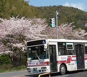 金辺トンネルバス停の桜 西鉄バス北九州