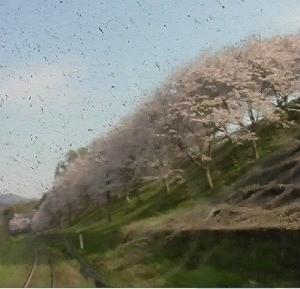【前面展望】平成筑豊鉄道 田川線の桜・田川後藤寺~源じいの森