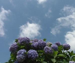 福智山と雲・アジサイと雲