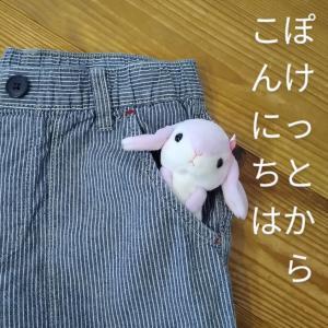 小学生男子のズボンに必要な物、それはポケット