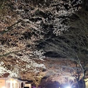 花見キャンプ【一分咲き】:後編 <成田ゆめ牧場キャンプ場>