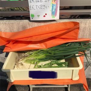 [家庭菜園]野菜お持ち帰りコーナー🥬