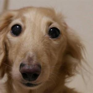16年飼っていた犬が亡くなって1年が経ちました