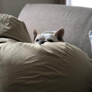 眠れない…