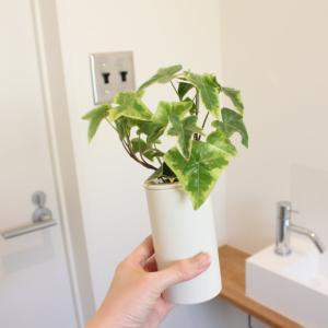 【無印良品】インテリアフレグランスの容器でアイビーの水栽培【観葉植物】