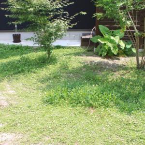 お金をかけない庭づくり〜繁殖力がすごい!グランドカバーにヒメイワダレソウ(クラピア)♡成長の様子
