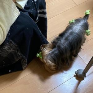 福君ママさん、好きです ~ 犬服教室