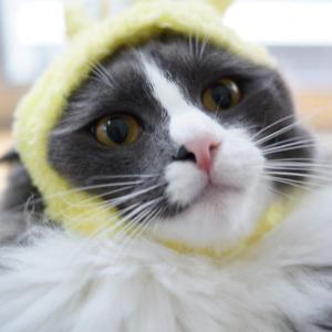きょうのネコズ 生活の崩壊と再建