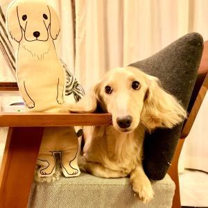 【重要】犬が苦手な方と、お子様ご同伴の生徒様はレンタルスペースでのレッスンでのみ承ります