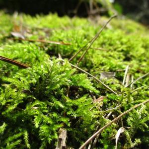植物や苔を探しに出かけよう!山採りの方法